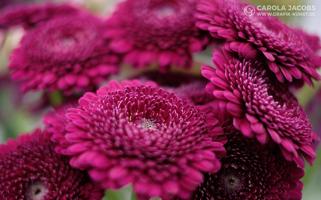Florale Impressionen